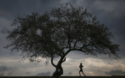 How exercise may protect the brain against stress-induced depression